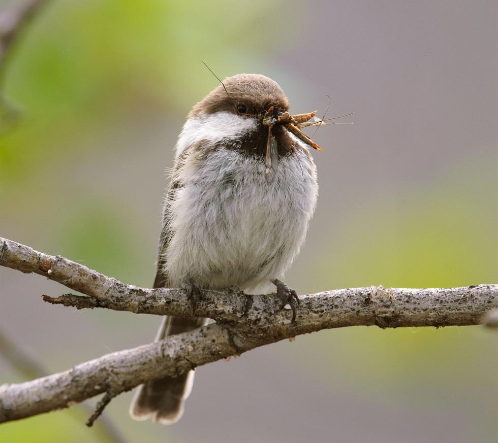 Học gì từ Chuyện kể về trăm loài chim - Ảnh 16.
