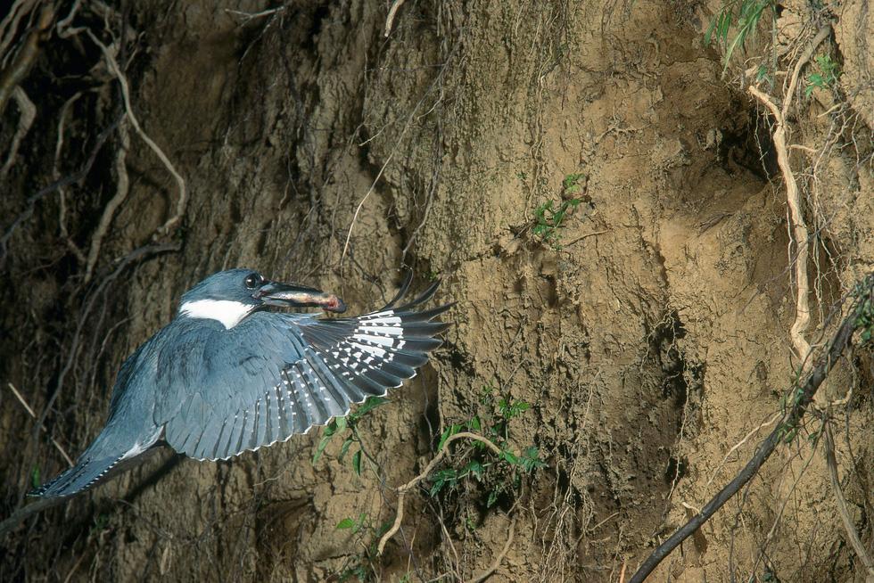 Học gì từ Chuyện kể về trăm loài chim - Ảnh 17.
