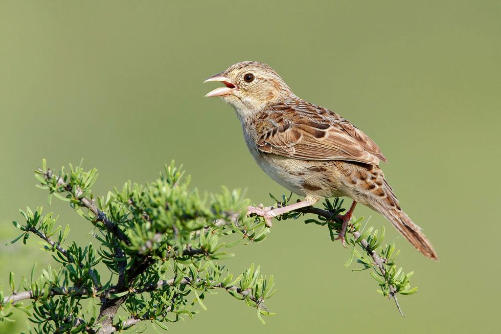 Học gì từ Chuyện kể về trăm loài chim - Ảnh 18.