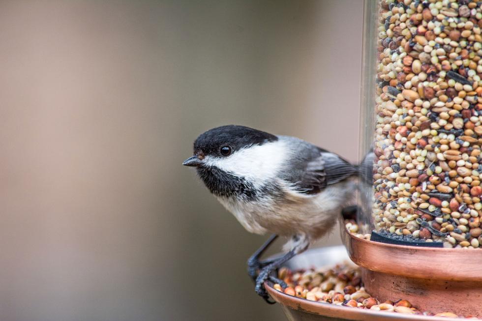 Học gì từ Chuyện kể về trăm loài chim - Ảnh 19.
