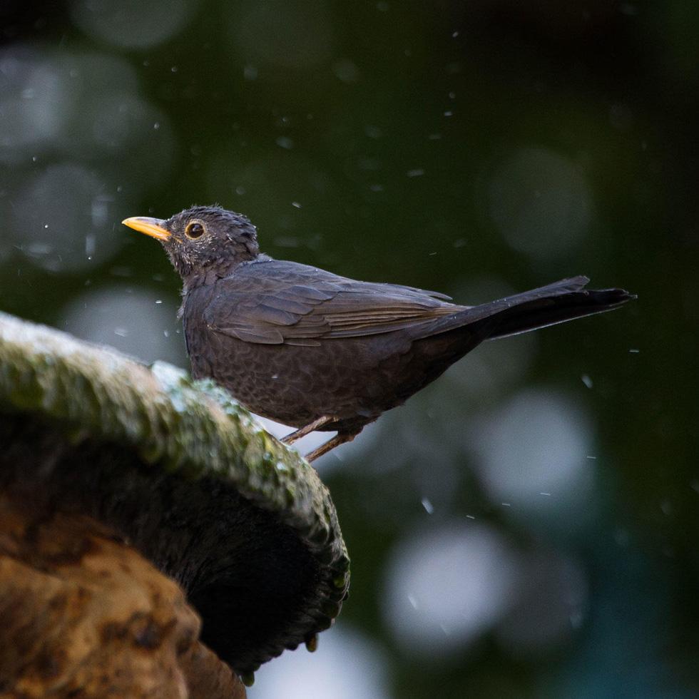 Học gì từ Chuyện kể về trăm loài chim - Ảnh 20.