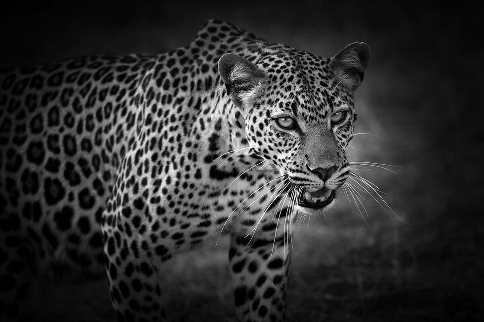 Động vật hoang dã biến mất, chúng ta cũng không còn - Ảnh 15.