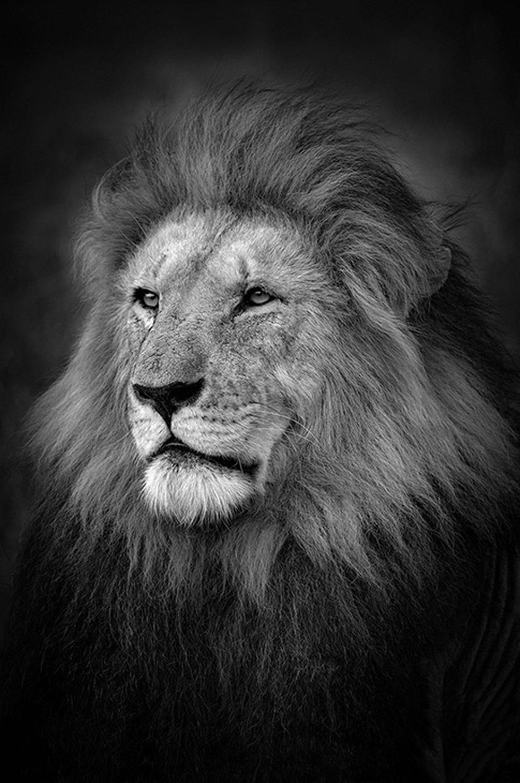 Động vật hoang dã biến mất, chúng ta cũng không còn - Ảnh 8.