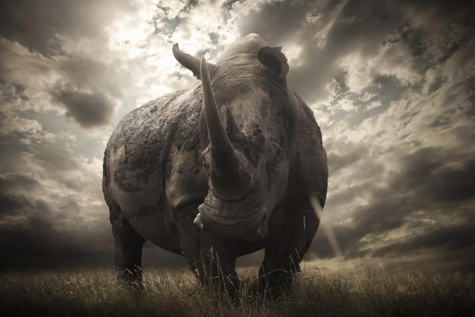 Động vật hoang dã biến mất, chúng ta cũng không còn - Ảnh 5.