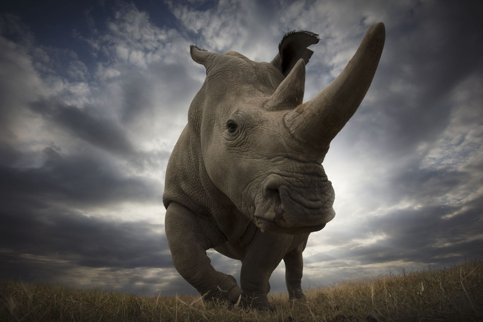 Động vật hoang dã biến mất, chúng ta cũng không còn - Ảnh 11.