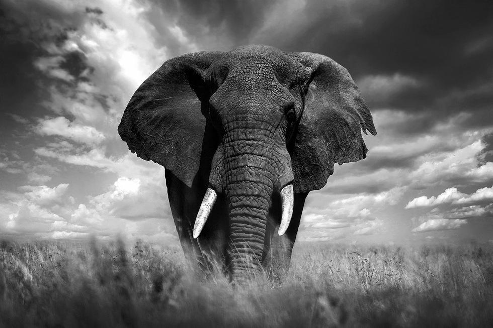 Động vật hoang dã biến mất, chúng ta cũng không còn - Ảnh 4.