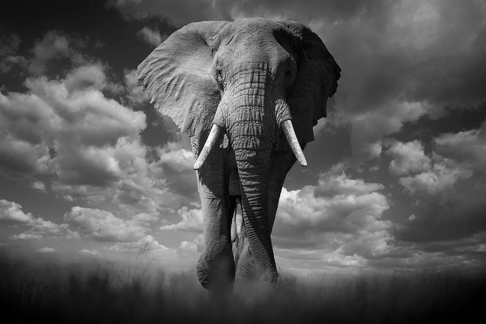 Động vật hoang dã biến mất, chúng ta cũng không còn - Ảnh 10.