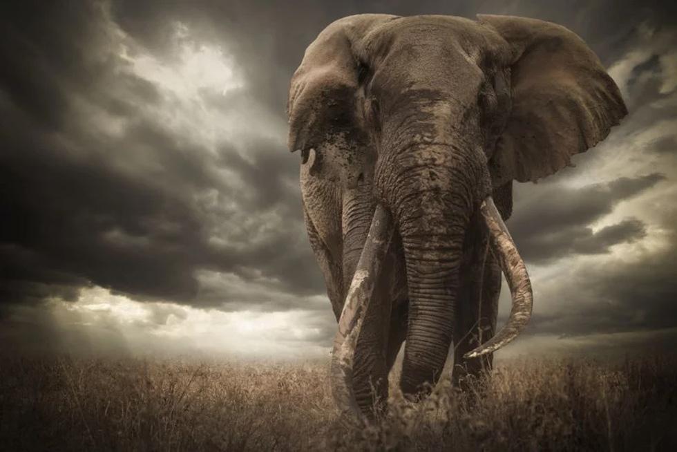 Động vật hoang dã biến mất, chúng ta cũng không còn - Ảnh 9.