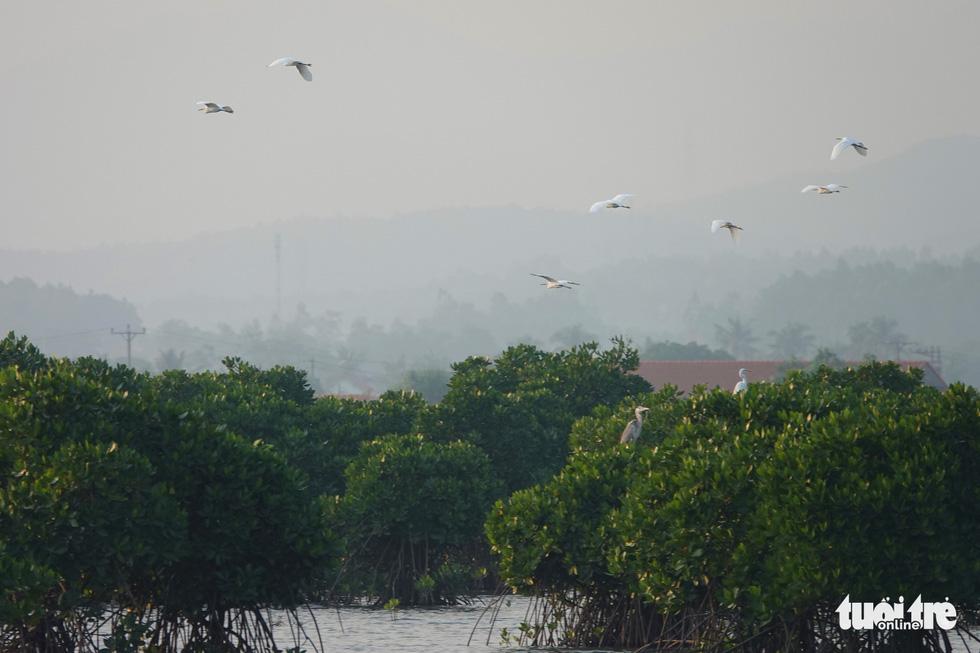 Sức hấp dẫn khó chối từ của rừng - biển Hoành Bồ - Ảnh 2.