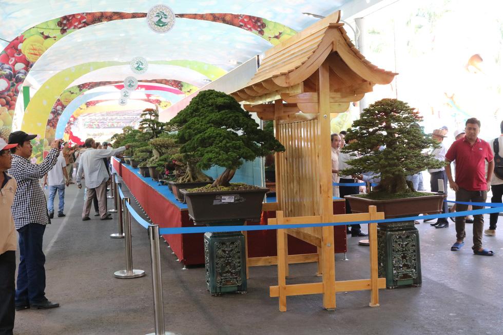 Chiêm ngưỡng những tác phẩm bonsai, suiseki tiền tỉ - Ảnh 3.