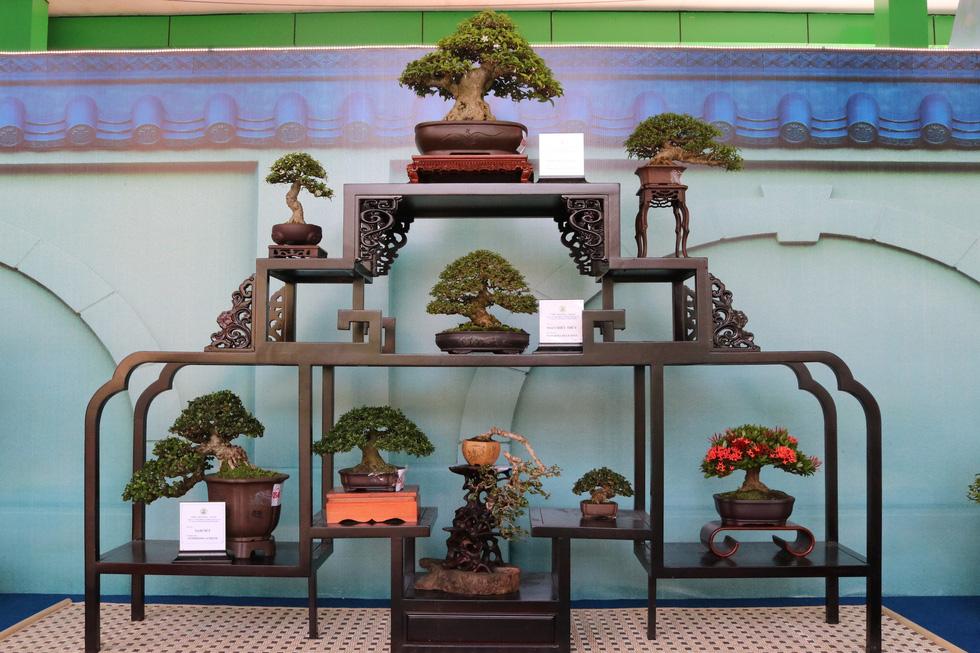 Chiêm ngưỡng những tác phẩm bonsai, suiseki tiền tỉ - Ảnh 8.