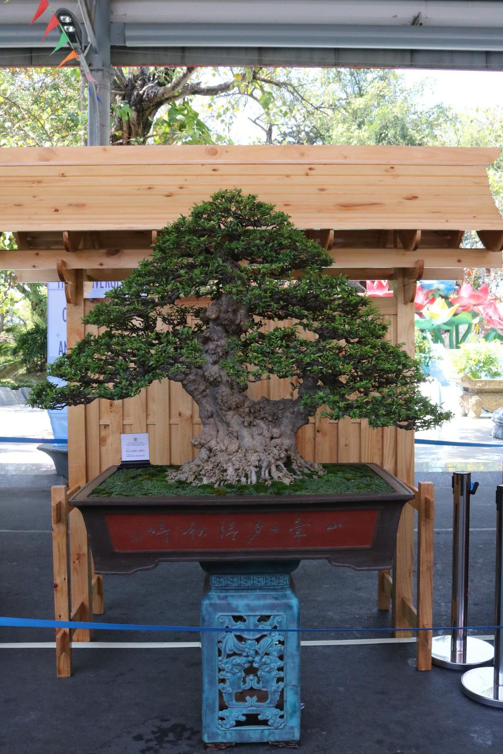 Chiêm ngưỡng những tác phẩm bonsai, suiseki tiền tỉ - Ảnh 9.