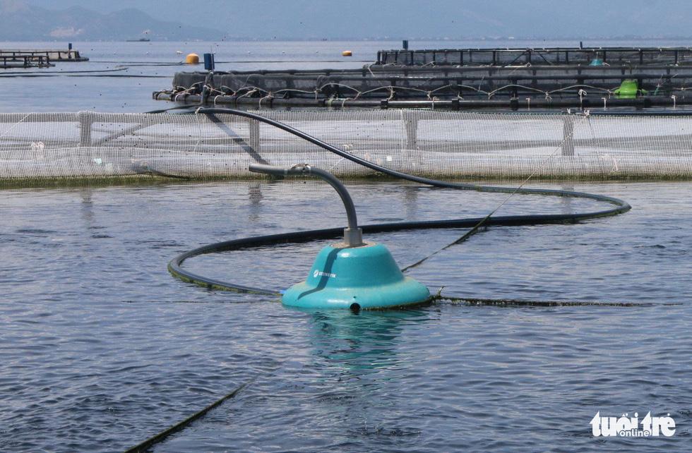Nuôi cá công nghệ mới: có bão cũng chẳng lo - Ảnh 9.