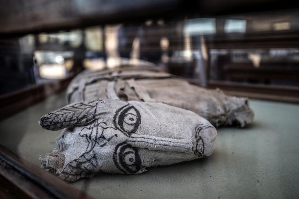 Ai Cập công bố 5 xác ướp sư tử con tìm thấy gần kim tự tháp Giza - Ảnh 3.