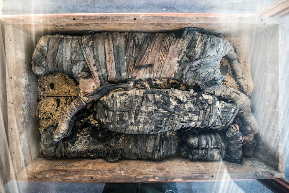 Ai Cập công bố 5 xác ướp sư tử con tìm thấy gần kim tự tháp Giza - Ảnh 1.