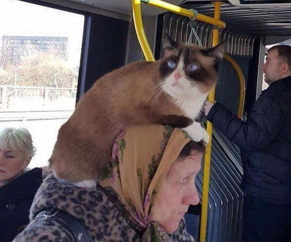 Những khoảnh khắc khó đỡ trên xe buýt, không thể nhịn cười - Ảnh 1.