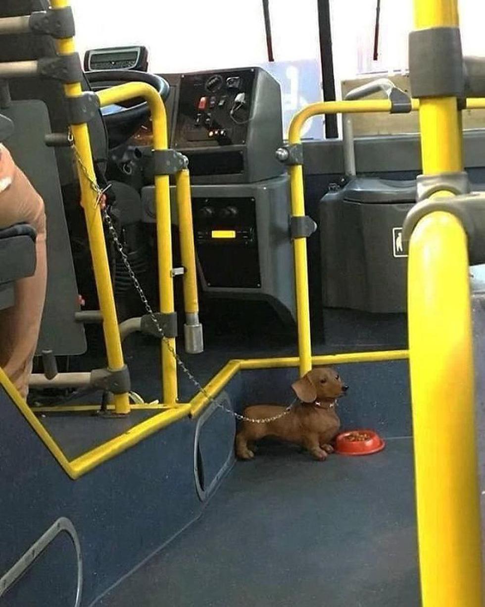 Những khoảnh khắc khó đỡ trên xe buýt, không thể nhịn cười - Ảnh 6.