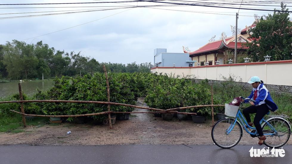 Thủ phủ mai miền Trung đưa mai đi trốn bão - Ảnh 10.