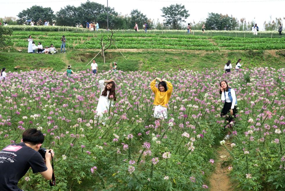 Mùa cúc họa mi nhộn nhịp từ vườn ra phố Hà Nội - Ảnh 8.