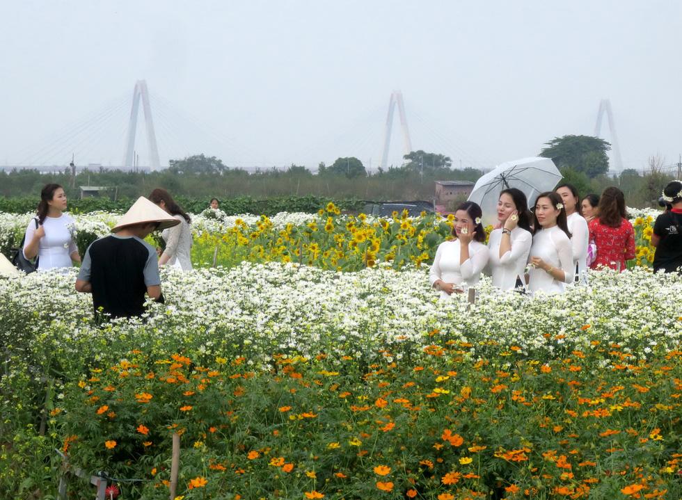 Mùa cúc họa mi nhộn nhịp từ vườn ra phố Hà Nội - Ảnh 16.