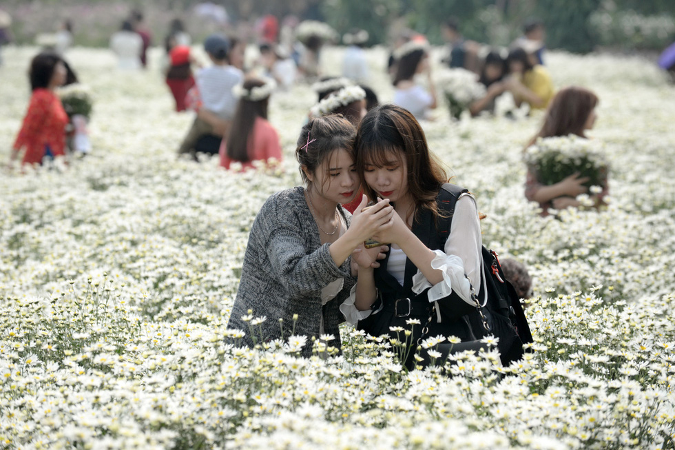 Mùa cúc họa mi nhộn nhịp từ vườn ra phố Hà Nội - Ảnh 9.