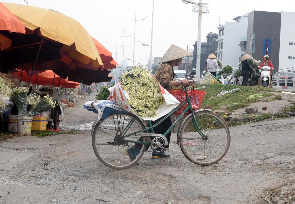 Mùa cúc họa mi nhộn nhịp từ vườn ra phố Hà Nội - Ảnh 17.