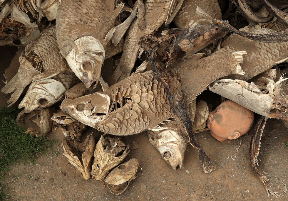 Nam châu Phi hạn hán kinh hoàng: cá chết khô, thác Victoria hùng vĩ cạn khô - Ảnh 2.