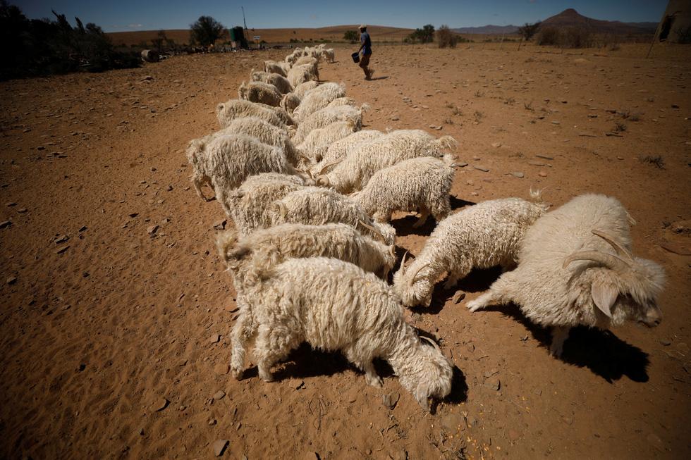 Nam châu Phi hạn hán kinh hoàng: cá chết khô, thác Victoria hùng vĩ cạn khô - Ảnh 3.