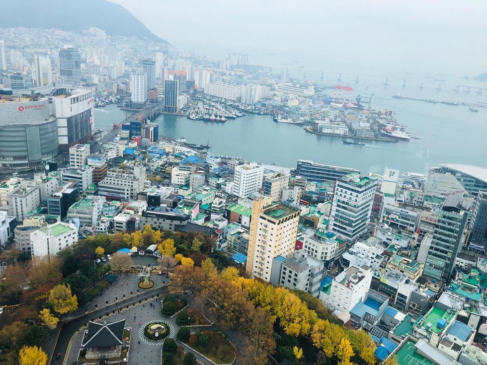 Ngày đông tới Busan thưởng thức hải sản, ra biển cho hải âu ăn - Ảnh 1.