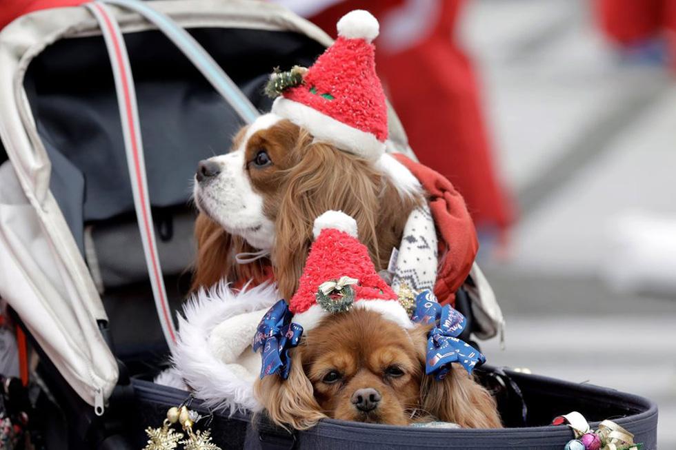 Chùm ảnh: Giáng sinh ấm áp vòng quanh thế giới - Ảnh 1.