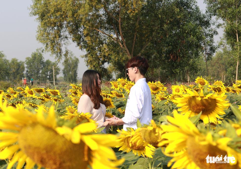 Selfie rực sắc vàng với vườn hướng dương ở TP.HCM   - Ảnh 7.