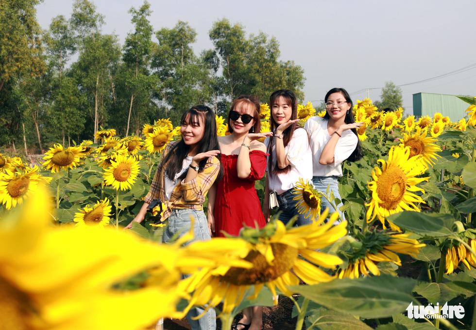 Selfie rực sắc vàng với vườn hướng dương ở TP.HCM   - Ảnh 1.
