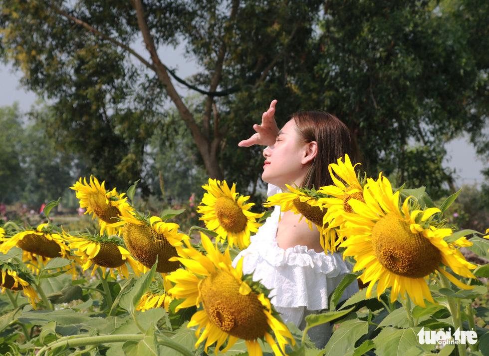 Selfie rực sắc vàng với vườn hướng dương ở TP.HCM   - Ảnh 9.