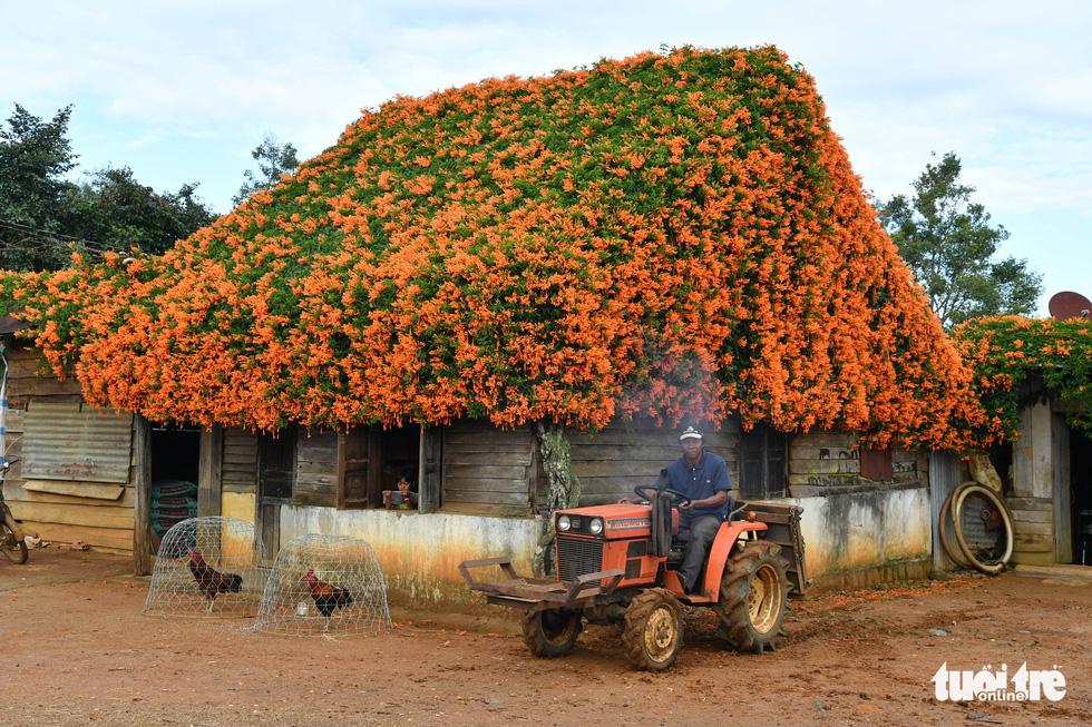 Ngôi nhà phủ hoa chùm ớt ở Lâm Đồng đã không còn - Ảnh 1.