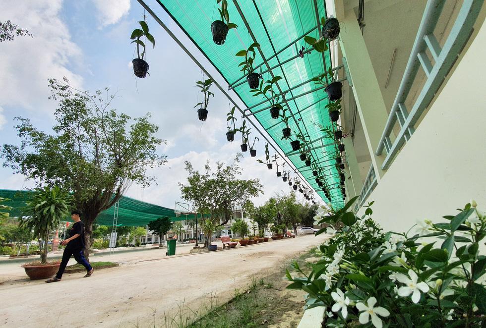 Độc đáo ngôi trường thầy trò trồng đầy bắp cải, rau, hoa - Ảnh 13.