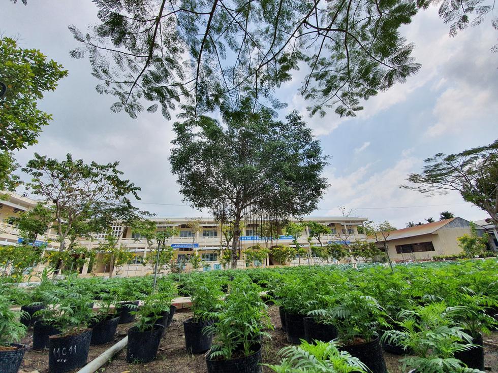 Độc đáo ngôi trường thầy trò trồng đầy bắp cải, rau, hoa - Ảnh 15.