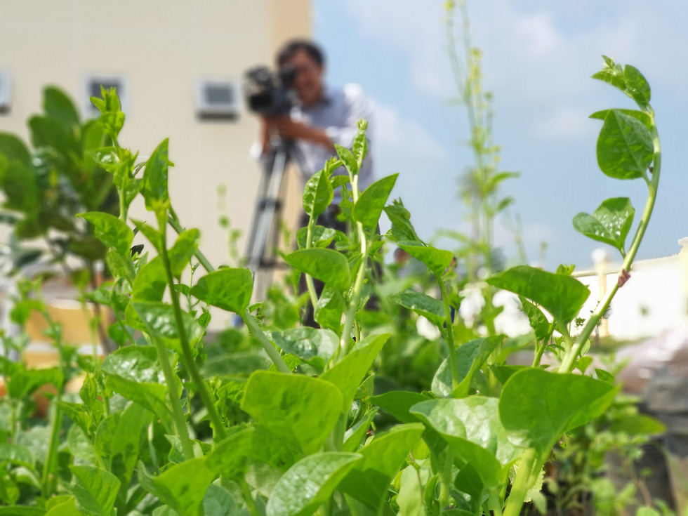 Độc đáo ngôi trường thầy trò trồng đầy bắp cải, rau, hoa - Ảnh 11.