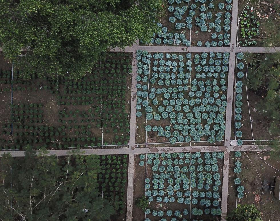 Độc đáo ngôi trường thầy trò trồng đầy bắp cải, rau, hoa - Ảnh 2.