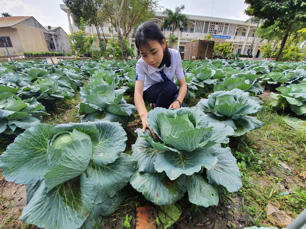 Độc đáo ngôi trường thầy trò trồng đầy bắp cải, rau, hoa - Ảnh 1.