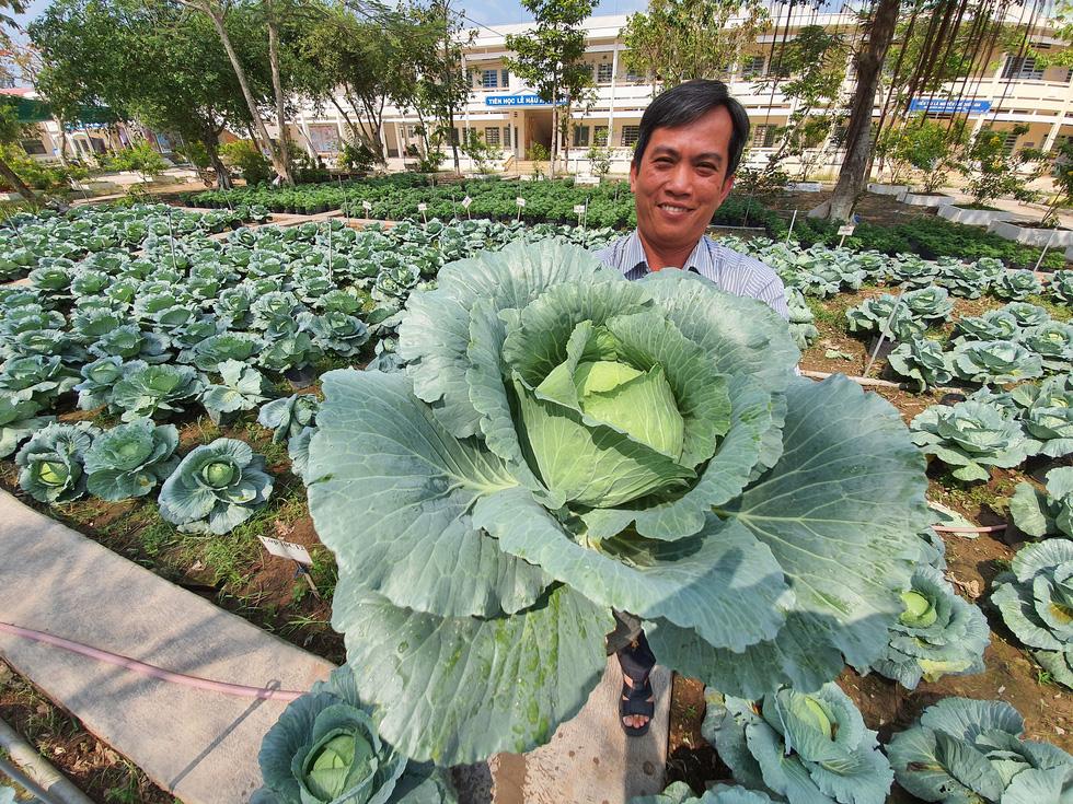 Độc đáo ngôi trường thầy trò trồng đầy bắp cải, rau, hoa - Ảnh 7.