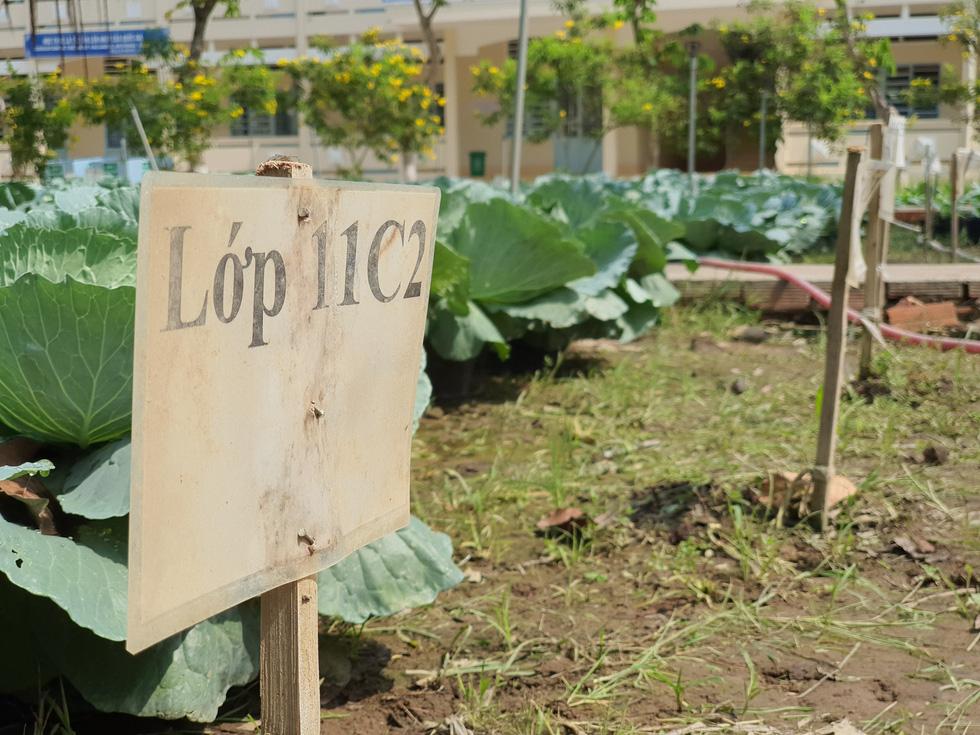Độc đáo ngôi trường thầy trò trồng đầy bắp cải, rau, hoa - Ảnh 6.