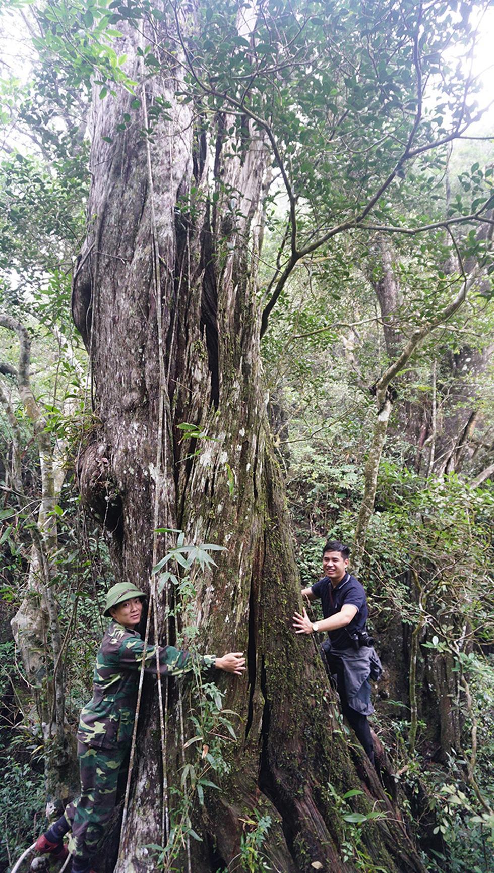Phóng sự đường rừng: Đi tìm rừng thiêng - Kỳ cuối: Giải mã linh mộc - Ảnh 1.