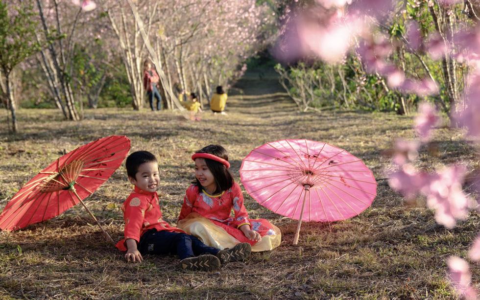 Hoa mai anh đào bung sắc hồng ở Măng Đen - Ảnh 3.