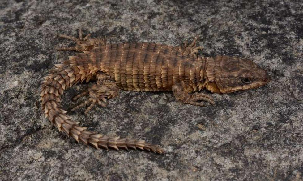 Những sinh vật lạ được phát hiện trong năm 2019 - Ảnh 2.
