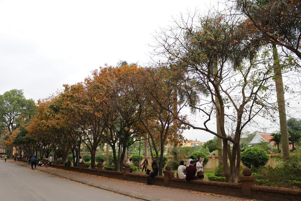 Hà Nội đẹp dịu dàng trong mùa cây thay lá - Ảnh 5.
