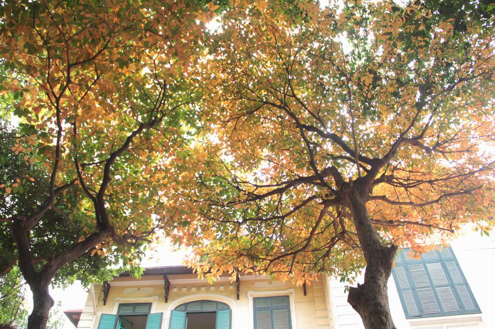 Hà Nội đẹp dịu dàng trong mùa cây thay lá - Ảnh 4.