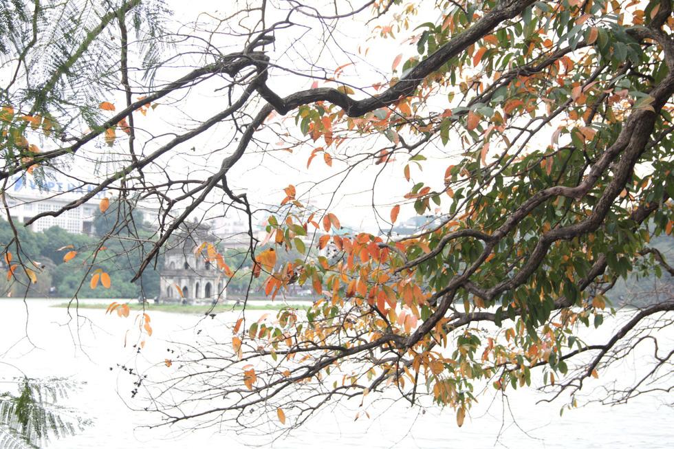 Hà Nội đẹp dịu dàng trong mùa cây thay lá - Ảnh 1.