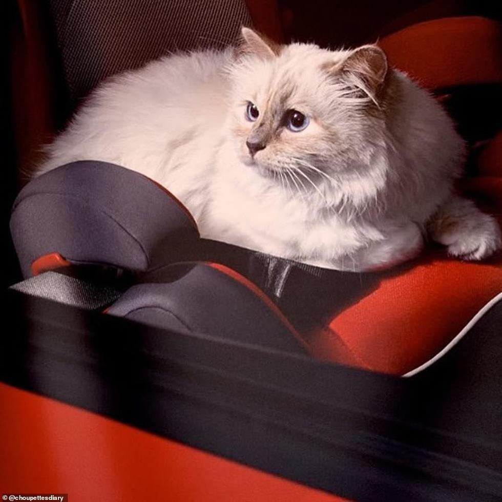 Cô mèo Choupette sẽ thừa kế 200 triệu đô của ông hoàng Chanel? - Ảnh 12.