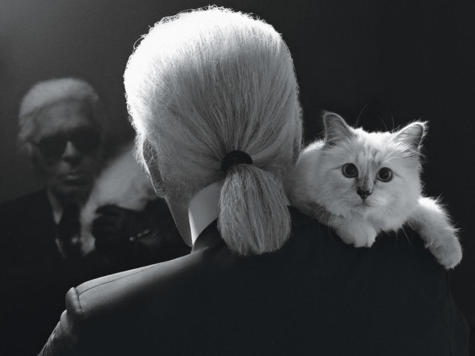 Cô mèo Choupette sẽ thừa kế 200 triệu đô của ông hoàng Chanel? - Ảnh 11.