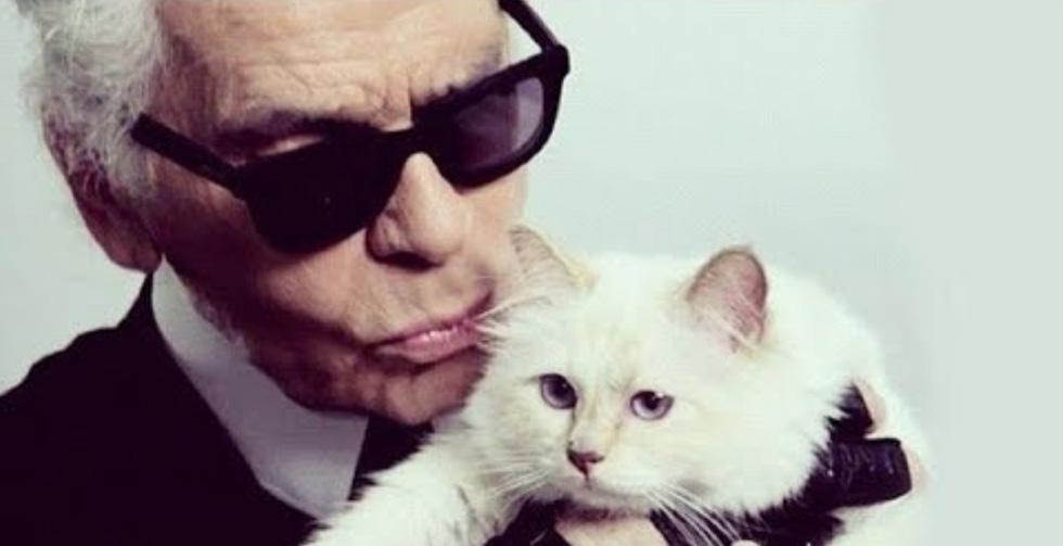 Cô mèo Choupette sẽ thừa kế 200 triệu đô của ông hoàng Chanel? - Ảnh 2.